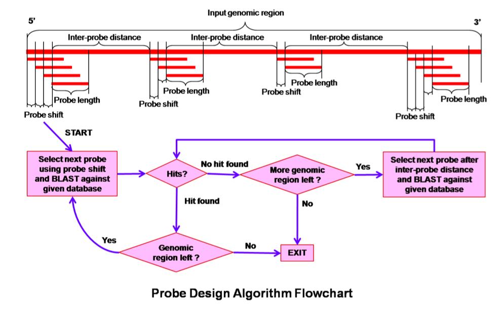 Probe Design figure